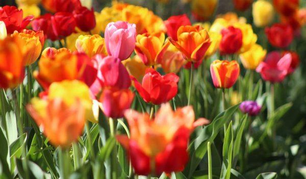 Jumpstart Your Spring Wardrobe with Kiyonna
